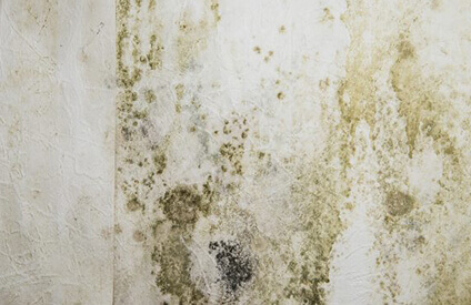 How To Spot Mold Growth In Your Home