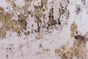 Mold Control Services